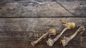 Un osso rosicchiato Fotografia Stock