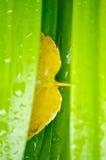 Un otoño amarillo Imagen de archivo libre de regalías