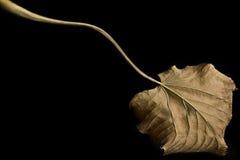 Un otoño largo Fotos de archivo libres de regalías