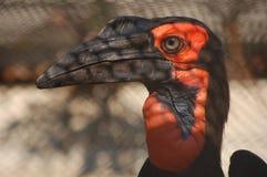 Un pájaro Imágenes de archivo libres de regalías