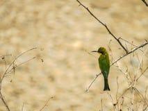 Un pájaro Imagen de archivo