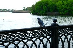 Un pájaro Imagenes de archivo