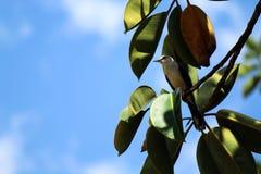 Un pájaro aterrizó en una rama de un árbol fotografía de archivo libre de regalías