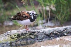 Un pájaro colorido se reclina sobre un registro cerca del agua. Fotografía de archivo