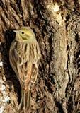 Un pájaro en invierno Foto de archivo