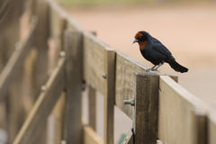 Un pájaro en la cerca Fotografía de archivo