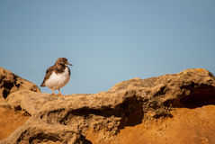 Un pájaro en la roca Fotos de archivo