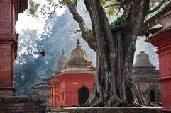 Un pájaro en la sol en el templo de Hinduist Imagen de archivo libre de regalías