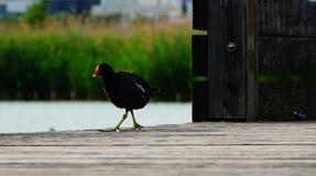 Un pájaro en un día soleado cerca del lago Imágenes de archivo libres de regalías