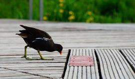 Un pájaro en un día soleado cerca del lago Fotografía de archivo libre de regalías