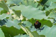 un pájaro en una hoja Foto de archivo libre de regalías