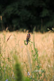 Un pájaro en una ramificación Imagenes de archivo