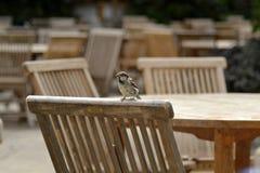 Un pájaro en una silla Imágenes de archivo libres de regalías