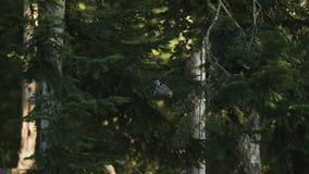 Un pájaro es el tomar de un árbol almacen de video