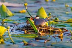 Un pájaro está alimentando su polluelo Fotos de archivo libres de regalías