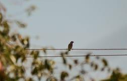 Un pájaro que se sienta en un alambre eléctrico y que busca una manera de ir foto de archivo
