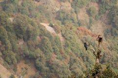 Un pájaro que se sienta en el árbol quebrado en montañas Imagenes de archivo