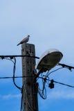 Un pájaro que se sienta en posts de la lámpara de calle Foto de archivo libre de regalías