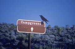 Un pájaro que se sienta en una muestra del camping foto de archivo