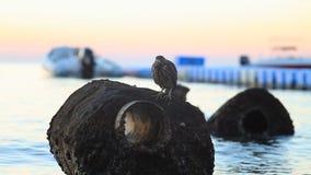Un pájaro que se sienta en una roca en la orilla del Mar Rojo almacen de metraje de vídeo