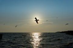 Un pájaro que vuela sobre la costa de la playa fotos de archivo
