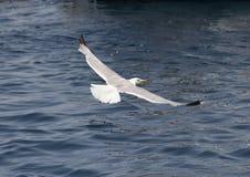 Un pájaro sobre el mar Imágenes de archivo libres de regalías