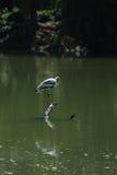 Un pájaro solo Fotos de archivo