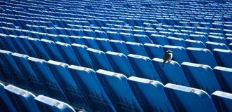 Un pájaro solo en soportes del estadio Imagenes de archivo
