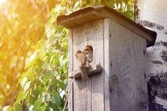 un pájaro un gorrión un padre trajo su pájaro con un insecto en su pico en una casa del pájaro Fotografía de archivo libre de regalías