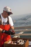 Un pêcheur avec des poissons pour l'amorce Images stock