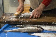 Un pêcheur Removing les échelles de poissons Photographie stock libre de droits