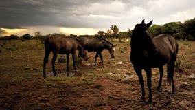 Un pacchetto dei cavalli nel prato Immagine Stock Libera da Diritti