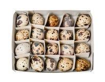 Un pacchetto di venti uova di quaglia di dieta Vista superiore Immagine Stock Libera da Diritti