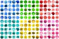 Un pacchetto mega di 150 in 1 naturale e fiori blu, gialli, rossi, rosa, verdi e del turchese surreali isolati Fotografie Stock Libere da Diritti