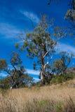 Un paesaggio australiano Immagini Stock Libere da Diritti