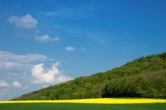 Un paesaggio con un campo della colza/della colza Fotografia Stock