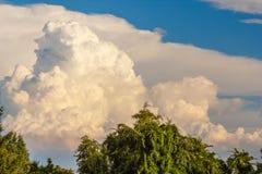 Un paesaggio degli alberi delle nuvole bianche e degli alberi verdi reali Fotografie Stock