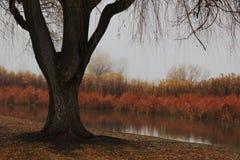 Un paesaggio del lago di autunno. Immagine Stock Libera da Diritti
