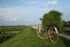 Un paesaggio del paese con la bicicletta e l'erba Immagini Stock Libere da Diritti