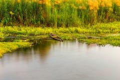 Un paesaggio dell'erba verde con lo stagno e una piccola barca abbandonata Fotografia Stock Libera da Diritti