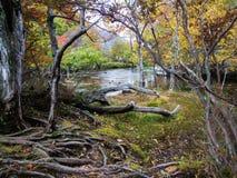 Un paesaggio della corrente in foresta variopinta fotografie stock