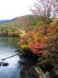 Un paesaggio della foresta variopinta alla riva del lago fotografie stock