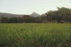 Un paesaggio della montagna Immagine Stock