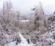 Un paesaggio della montagna con neve ed alberi nella parte anteriore Fotografie Stock