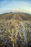 Un paesaggio di un colpo agricolo dorato del campo da una pila di h Fotografia Stock