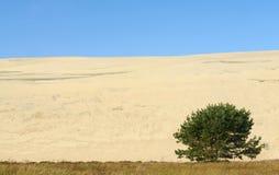 Un paesaggio di estate di una sabbia-duna con un albero Fotografie Stock Libere da Diritti