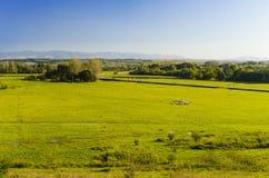 Un paesaggio enorme del pascolo con la moltitudine di pecore Immagini Stock