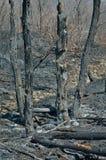 Dopo incendio forestale 12 Fotografie Stock Libere da Diritti