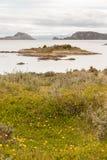 Un paesaggio fra le isole a sud di Ushuaia, Argentina, in primavera Immagini Stock