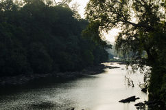 Un paesaggio ha sparato di un fiume che passa attraverso una foresta Immagini Stock Libere da Diritti